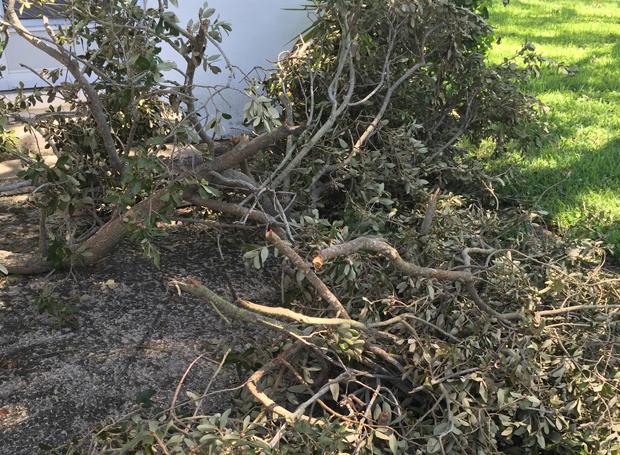 storm-debris